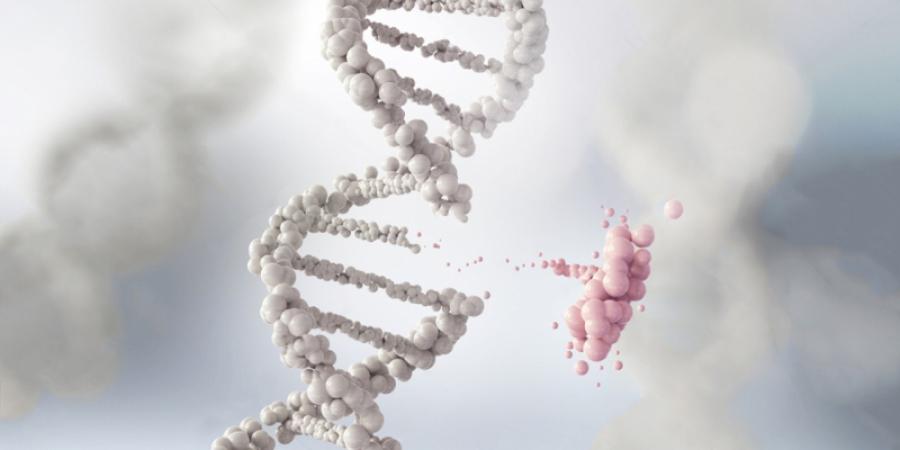 Mapeamento genético - Eleve - Leveza, Metamorfose, Beleza
